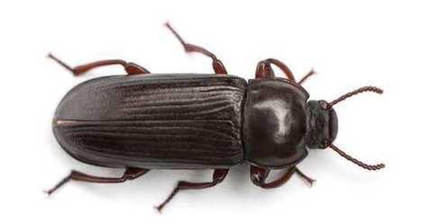 Ynsect, la start up qui va nourrir les animaux avec des scarabées | Planete DDurable | Scoop.it
