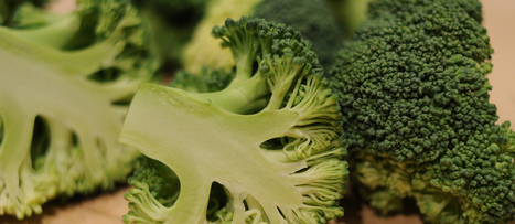 Broccoli Boosts Liver Detox Enzymes | NutritionFacts.org | Plant Based Nutrition | Scoop.it