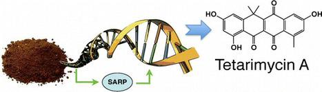 Tetarimycin A, an MRSA-Active Antibiotic Identified through Induced Expression of Environmental DNA Gene Clusters   Molecular biology   Scoop.it