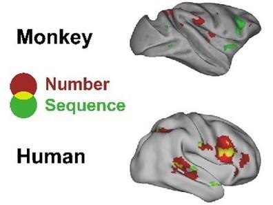 Une avancée dans la compréhension des origines du langage | Aux origines | Scoop.it