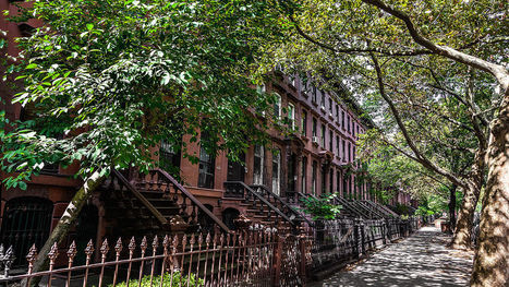 NASA Explains Why You Should Live On A Tree-Lined Street--And A Tree-Lined City | CW | Scoop.it