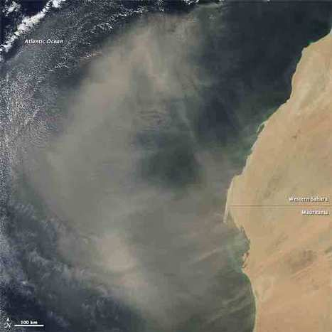 Desert dust feeds deep ocean life — The Daily Climate | Sustain Our Earth | Scoop.it