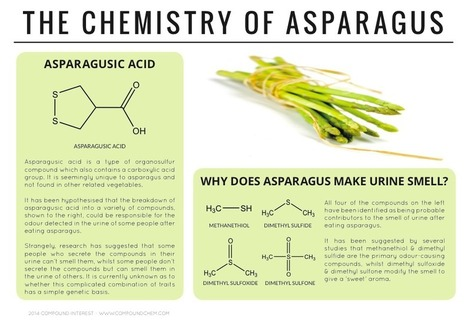Why Does Asparagus Make Urine Smell? - The Chemistry of Asparagus   Food Science – a grrrreat degree   Scoop.it