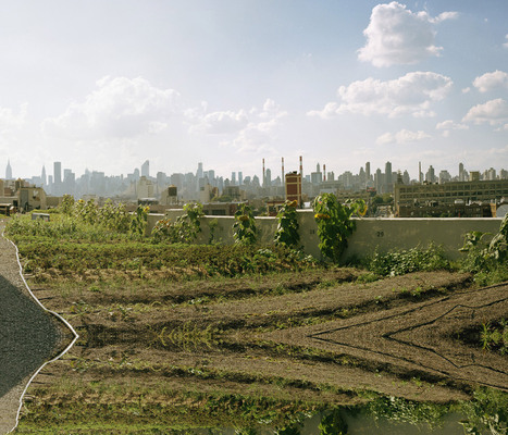 Urban Agriculture in New York City | Five Borough Farm | People and Development | Scoop.it