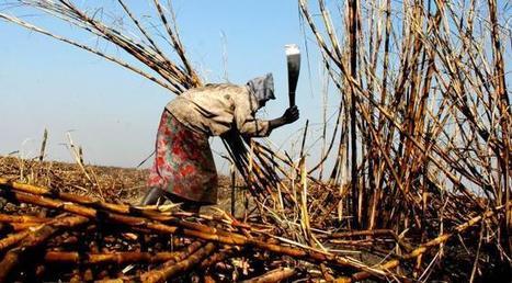 Le piège de la « révolution verte » | Questions de développement ... | Scoop.it