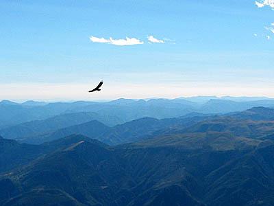 Les vautours fauves de retour en Savoie | Planète, Nature et Biodiversité | Scoop.it