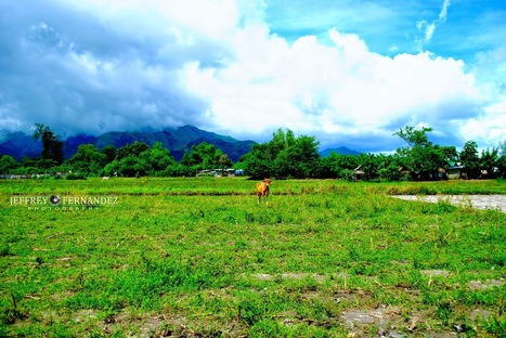 Find the Carabao - Frustrated Photographer   Photography   Scoop.it