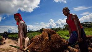 Bénin : Le FMI investit dans les infrastructures agricoles | Questions de développement ... | Scoop.it