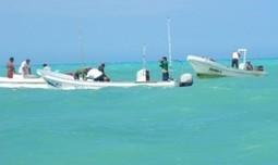 Sexo por pepino de mar | Pepineros Península de Yucatán | Scoop.it