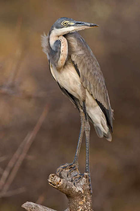 34 Superb Wild Bird Photos to Inspire and Fascinate You | Design | Scoop.it
