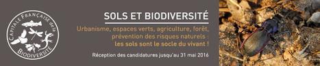 29 septembre à Angers - Sols et Biodiversité | Variétés entomologiques | Scoop.it