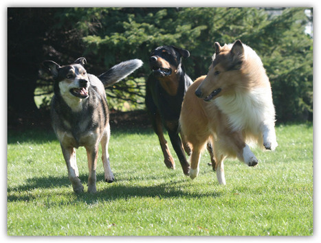K9's In Motion - Dog Walking And Pet Sitting Services, Woodstock ON | Dog Walking Woodstock | Scoop.it