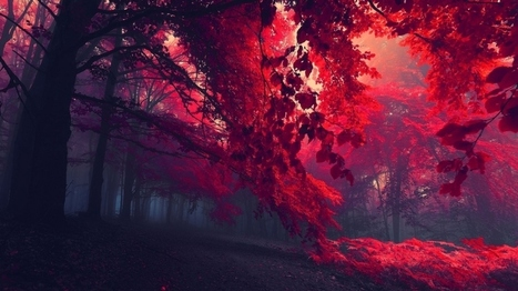 red forest wallpaper | wallpapers | Scoop.it