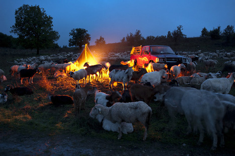 Dragoș Lumpan – The Last Transhumance | Constantin Nimigean - oitzarisme | the before and the after of photography | Scoop.it