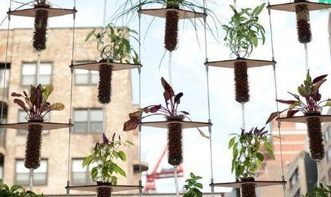 The elegance of hydroponics | CALS in the News | Scoop.it