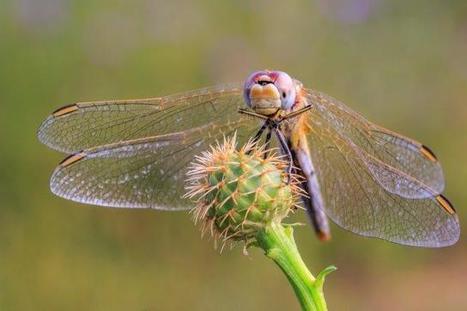 Un caoutchouc très performant inspiré des insectes pourrait être utilisé en médecine | EntomoNews | Scoop.it