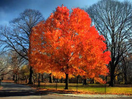 Video: Time Lapse: Fall in Central Park | Horn APHuG | Scoop.it