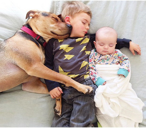 Adorable Photos of a Little Trio's Daily Nap Time | What about? What's up? Qué pasa? | Scoop.it