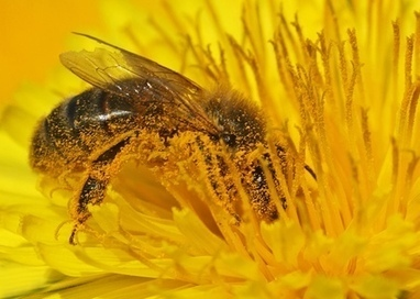 Forecasting pollen in the atmosphere - Youris.com | Bayesian Statistical Modelling | Scoop.it