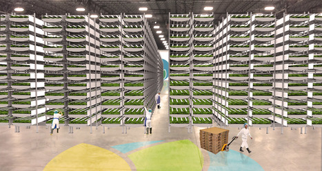 World's Biggest Indoor Vertical Farm Near NYC to Use 95% Less Water | Societal Resilience, Mobility, Living, Logistics, Infrastructure | Scoop.it