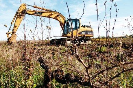 Quatre hectares de vigne arrachés par prévention | Agriculture en Gironde | Scoop.it