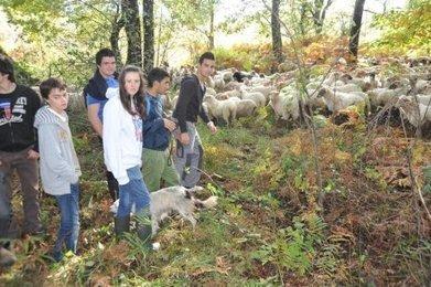 200 moutons vont assurer le nettoyage du grand étang de La Jemaye (24) | Agriculture en Dordogne | Scoop.it