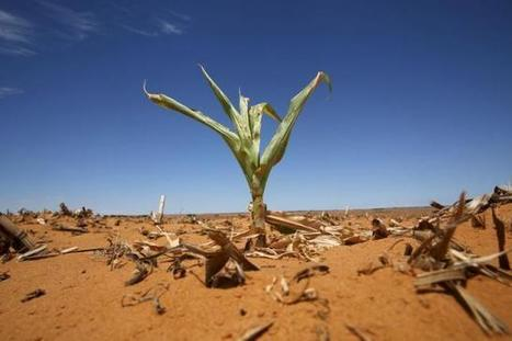 South Africa suffers driest year on record in 2015 | Farming, Forests, Water, Fishing and Environment | Scoop.it