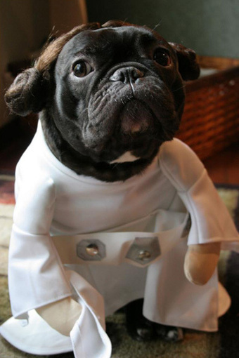 Best Star Wars Pet Costumes | All Geeks | Scoop.it