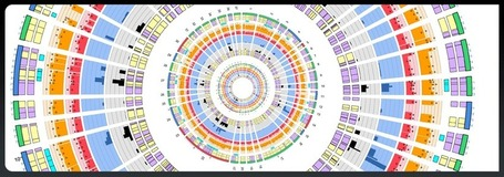 Create Stunning Circular Infographics: Circos | Amazing Science | Scoop.it