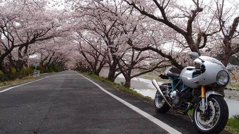 beauty explosion in Japan | ClassyEdgyWildWheels: bikes, motorbikes & automobiles | Scoop.it