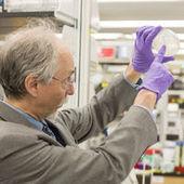 Sc2.0, la première levure dotée d'un chromosome artificiel | Science et société | Scoop.it