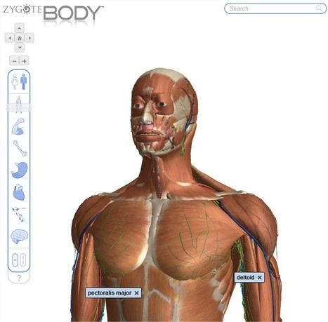 Zygote Body | TICE, Web 2.0, logiciels libres | Scoop.it