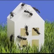 Pest control services in Manesar | Pest Control Services Delhi NCR | Scoop.it