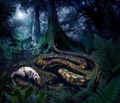 L'ancêtre des serpents actuels avait des pattes munies d'orteils | Aux origines | Scoop.it