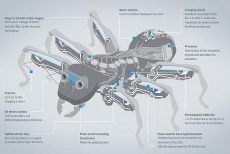 Ces robots fourmis remplaceront-ils demain les ouvriers dans nos usines ? | Vous avez dit Innovation ? | Scoop.it