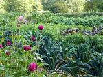 Des fleurs au potager | Potager & Jardin | Scoop.it