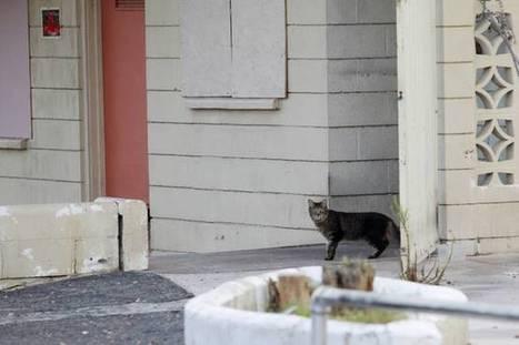 Animal Foundation pursuing new strategy to avoid euthanasia of stray cats - Las Vegas Sun | Philanthropy Topics | Scoop.it