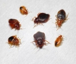 A Few Tips To Help With Pest Control | How To Control Fly? | Scoop.it