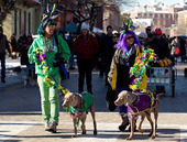 Bunny's Blog: Thousands of Dogs and Owners Participate in 20th Annual Beggin' Pet Parade | Pet News | Scoop.it