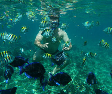 Five Great Places for Snorkelling and Diving in the Western Caribbean | Caribbean Islands | Scoop.it
