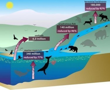 Declines in whales, fish, seabirds and large animals disrupt Earth's nutrient cycle | Marine Conservation Research | Scoop.it
