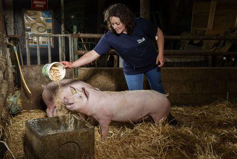 L'agriculture française ne se porte pas si mal | CIHEAM Press Review | Scoop.it