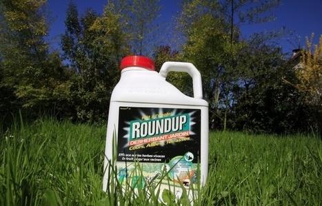 Ségolène Royal demande aux jardineries de ne plus vendre le Roundup de Monsanto   Les prestations analytiques au service de la qualité de vie   Scoop.it