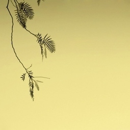 PvC –Stillness | Ambient Music | Scoop.it