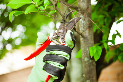 How to Pick the Right Tree Contractor for You | Blake's Tree Service | Scoop.it
