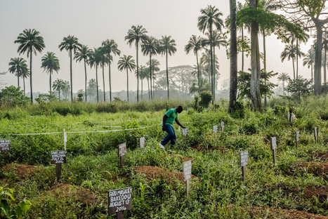 How Ebola Roared Back | Sustain Our Earth | Scoop.it