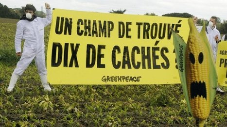 France - French court says 'non' to genetically modified corn | GMO GM Articles Research Links | Scoop.it