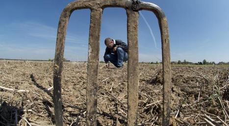 Le non travail du sol améliore sa biodiversité | Alim'agri | Agriculture durable | Scoop.it
