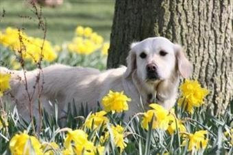 Cute dog and puppy photographs - Rover Recommended | Plan a Dog Friendly Holiday | Scoop.it