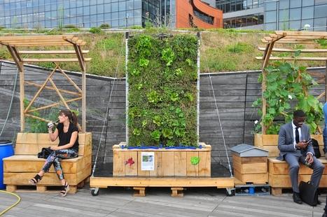 Living Roof : plantes et animaux font la nouba (bylone) — ZONE-AH!   Agriculture urbaine, architecture et urbanisme durable   Scoop.it